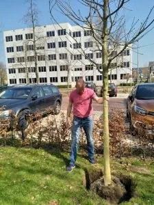 kei en eik- eikenboom planten