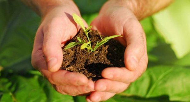 ถอนต้นไม้อย่างไรไม่ให้ ต้นไม้ตาย เคล็ดลับไม่ยากสำหรับคนเริ่มปลูกต้นไม้ 1