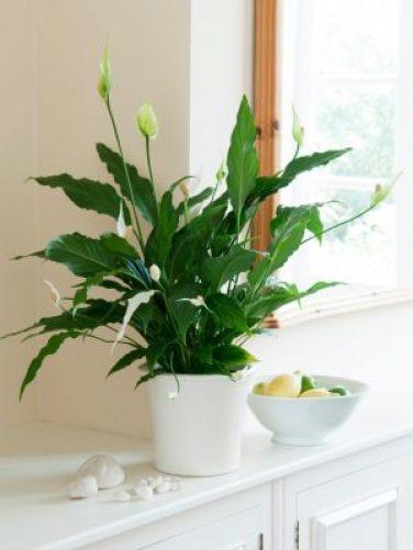 ฟอกอากาศในห้องด้วยต้นไม้ 5 ชนิด ที่หาได้ง่ายในเมืองไทย 3