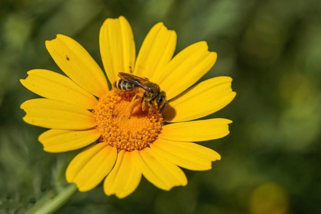 Μελισσοκομικά είδη Beelife