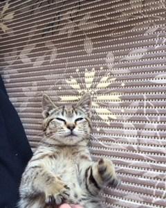 猫 ついてきました