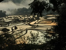 37 - Yuanyang - rice terraces