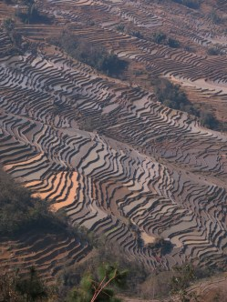 42 - Yuanyang - rice terraces