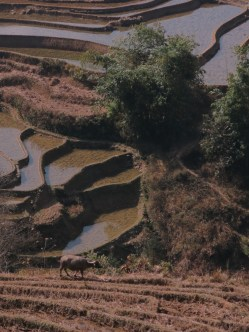 44 - Yuanyang - rice terraces