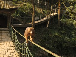 45 - Emei Shan - monkeys area