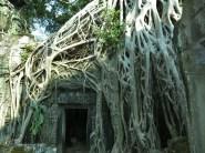 31 - Siem Reap - Ta Prohm