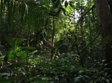 28-Luang Namtha-trekking in the jungle