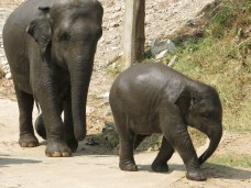 13 - Chiang Mai - Elephant nature park