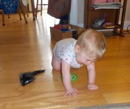 Itty BItty has learned to crawl! And pull up to standing!