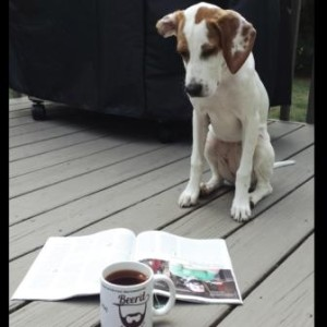 Lilly reading BeerAdvocate over Tea