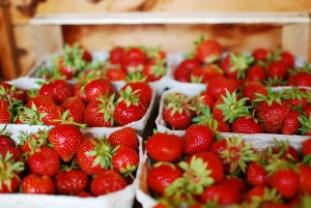 Erdbeeren soweit das Auge reicht