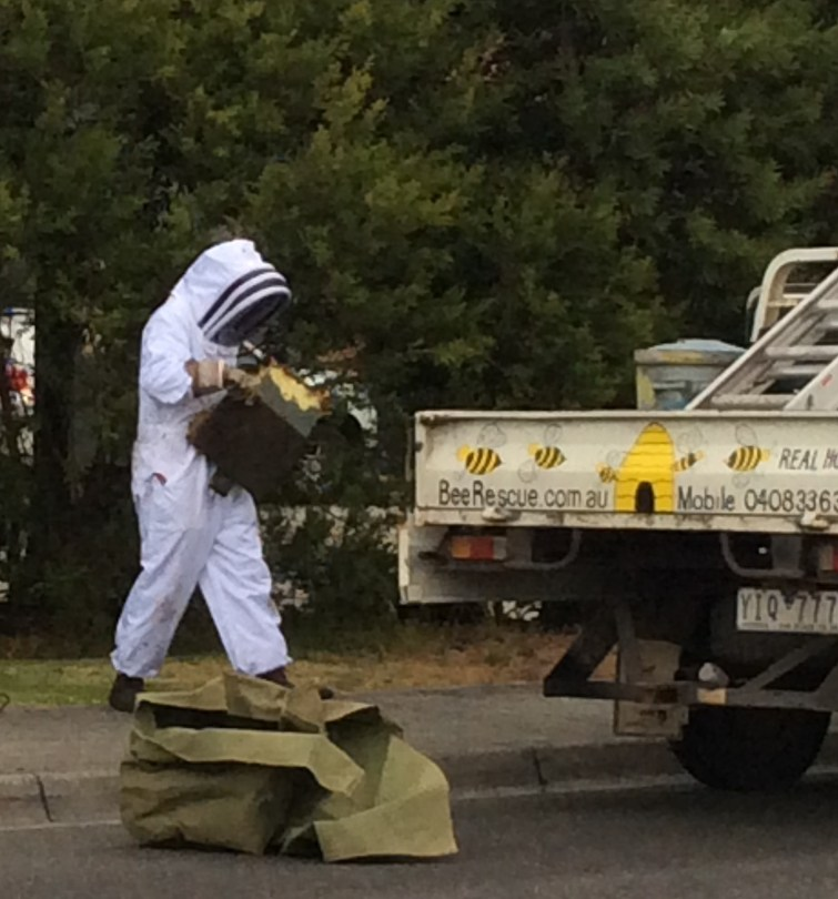 Bee Rescue in action...hundreds of hives humanely & safely rescued and removed each year across Melbourne