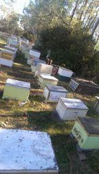 Bee pollination service