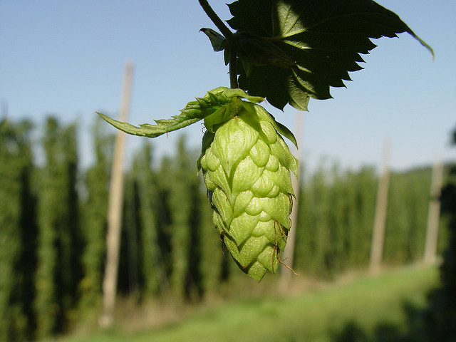019  Beer ingredients and brewing processes – Beer Exam School