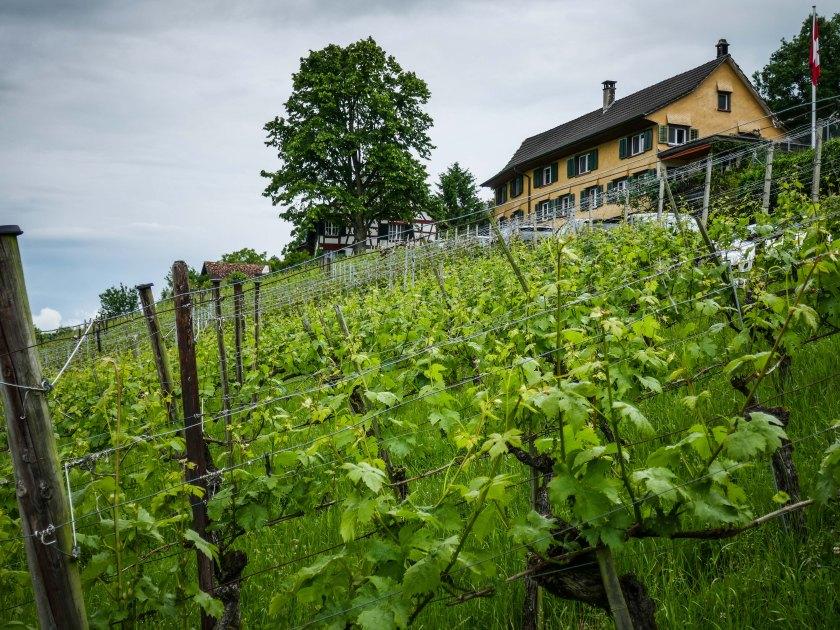 Solaris Weinfelden (1 von 1)-5