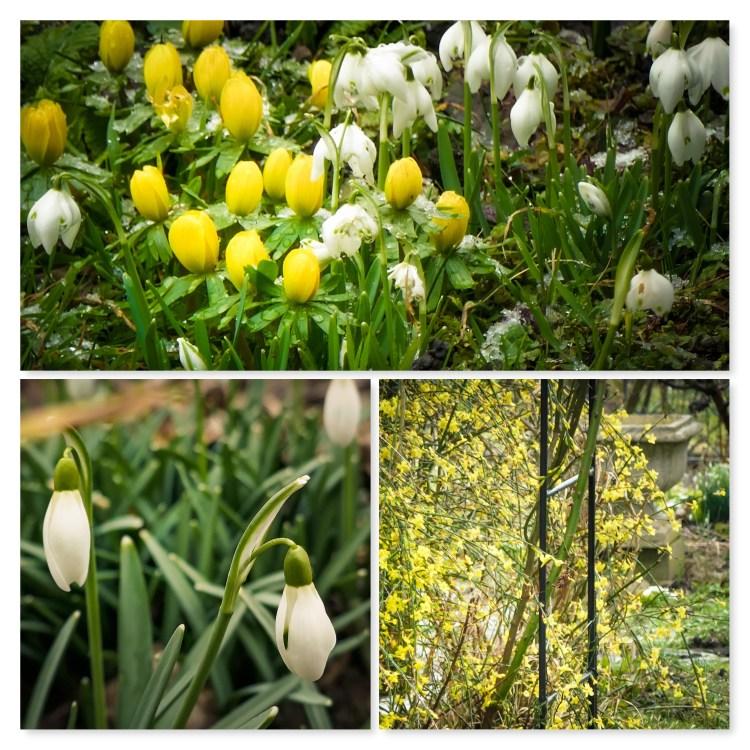 Frühling Februar Bodensee