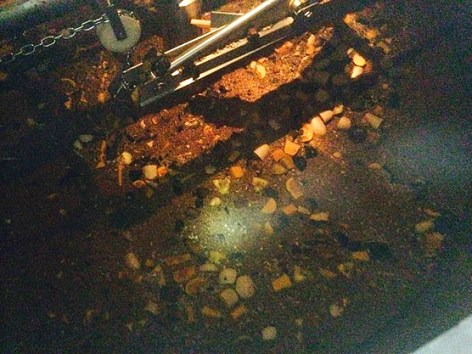 Roasted butternut and acorn squash in the mash tun