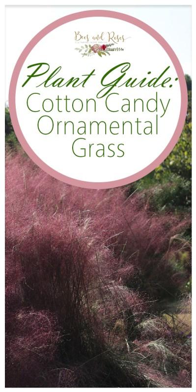cotton candy | cotton candy ornamental grass | ornamental grass | grass | plant guide