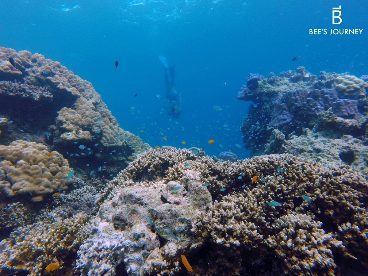 Freediving on Surin Island, Thailand | Bee's Journey Travel and Lifestyle Blog