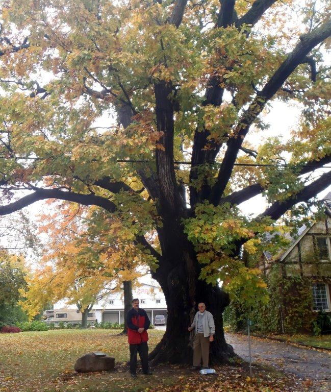 White Oak - War of 1812 Treaty Tree