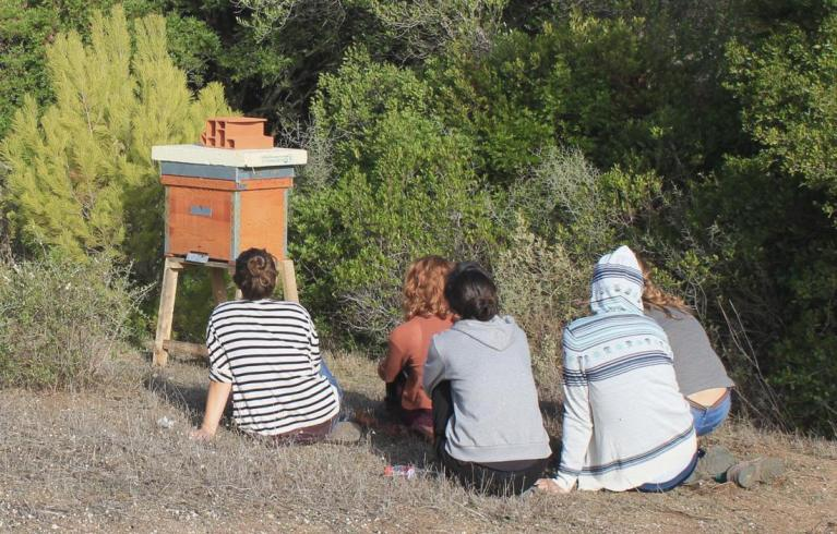 Hive observation.