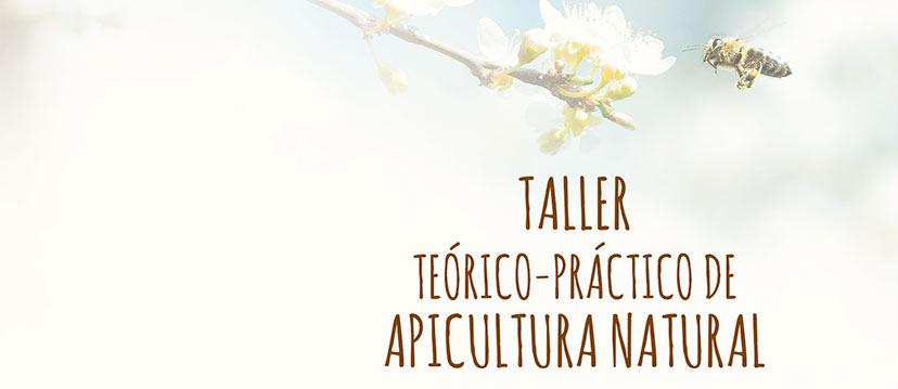 Taller teórico práctico de apicultura natural