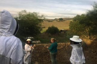 Visiting Apijanda's hives at Joanna Crowson