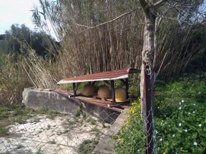 Nuestro nuevo colmenar en Santa Lucía queda inaugurado