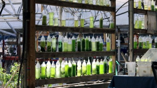 The Ecological Greenhouse project