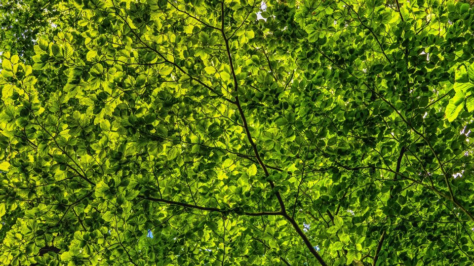 canopy-2552954_1920