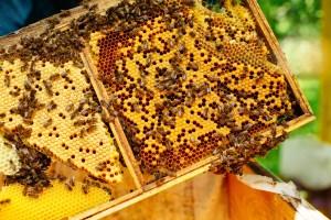 wat is echte honing
