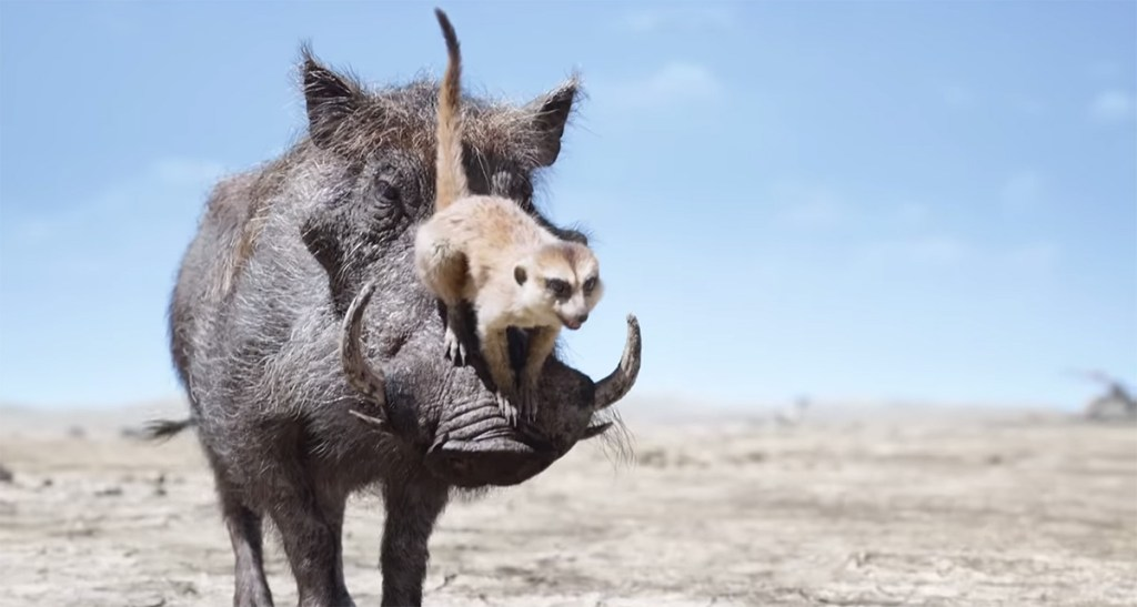 The very unique characteristics of a warthog's hair: grooming Pumbaa
