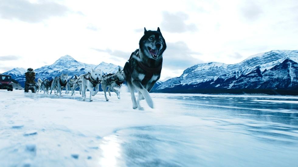 large volume of the dog sledding shots began