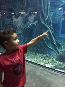 bebe-acuario-explora