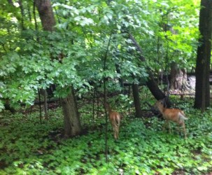 I see deer often, but these were right by the bike trail and they didn't move, even though Max was with me.