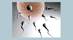 increase in fertility