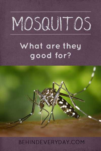 What are mosquitos good for? What if we erased them from the earth? What would happen?