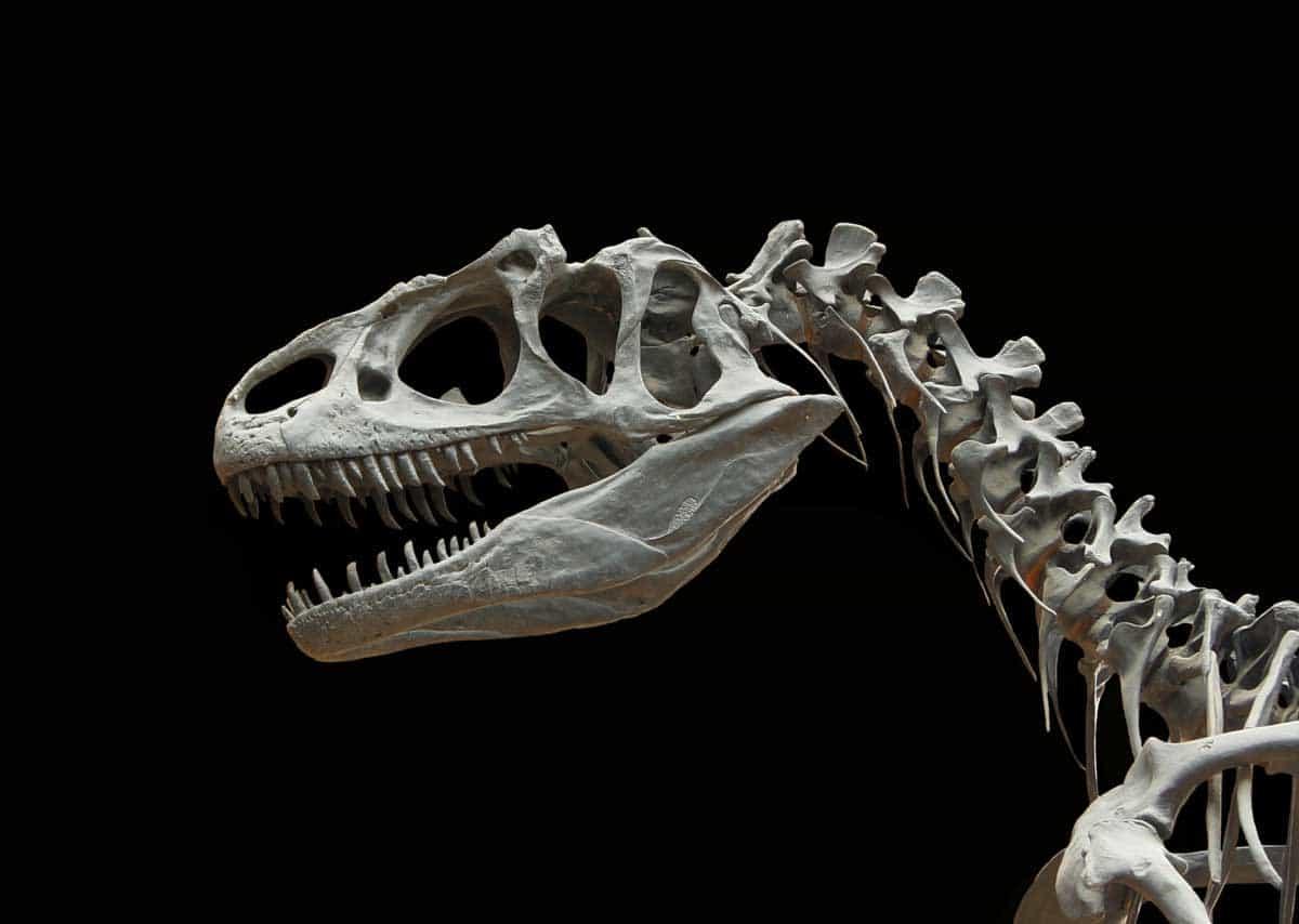 Dinosaurs via @behindeveryday