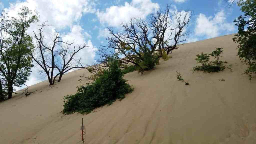 Looking up Mt Baldy (the largest dune at Indiana Dunes National Park) from the parking lot.