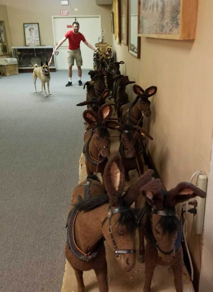 a model of a twenty mule train stretches the entire length of a room at the museum