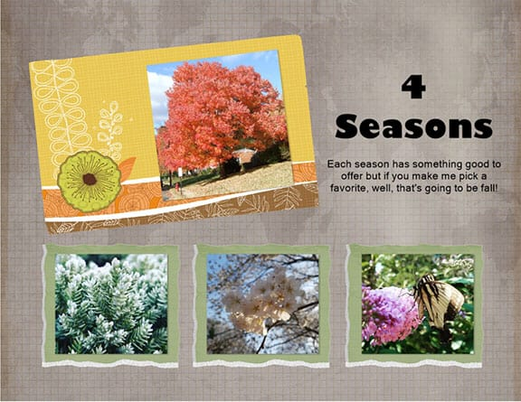 A 4 seasons collage showing a tree with orange leaves, pine branches covered with white frost, white cherry blossoms, and a butterfly on a pink flower