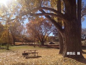 BH66-34-7315-圖1-娄怡云摄.秋景.R60