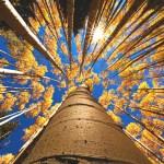蚍蜉撼大樹,主道永堅立——寫在宗教改革紀念日(慕容)2018.10.31