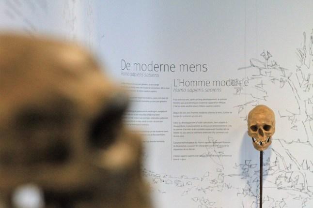 Archeologisch museum Velzeke - binnen - collectie - 001 de modere mens