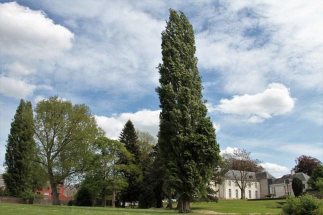 mooi Zottegem - park achter kasteel - IMG_5349