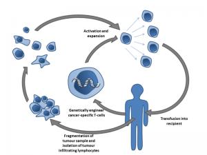 Diagram explaining immunotherapy