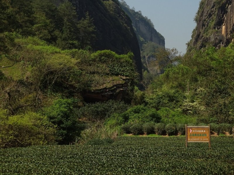Wuyi Shan tea terraces in front of a craggy valley
