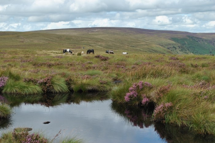Ponies and tarn
