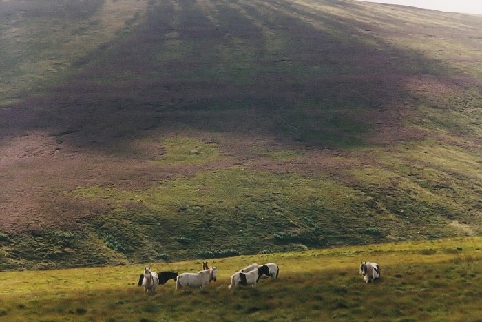 Being At The Cottage - Small band of Welsh Mountain ponies above the Grwyne Fawr reservoir