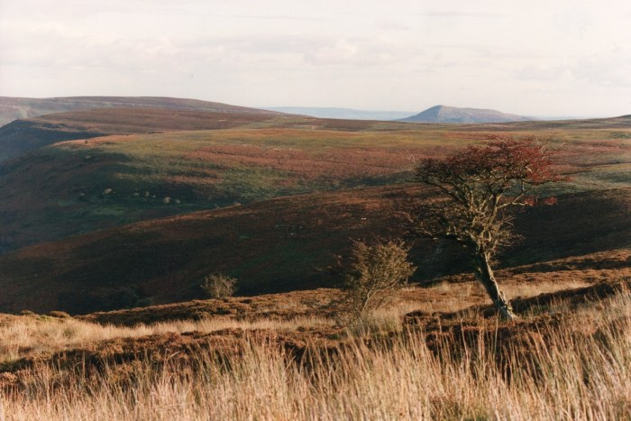being at the cottage - the black mountains autumn hawthorn